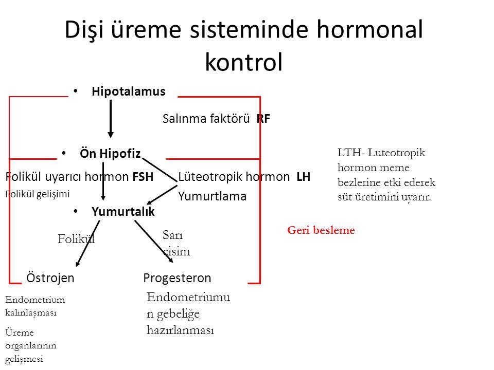 Dişi üreme sisteminde hormonal kontrol