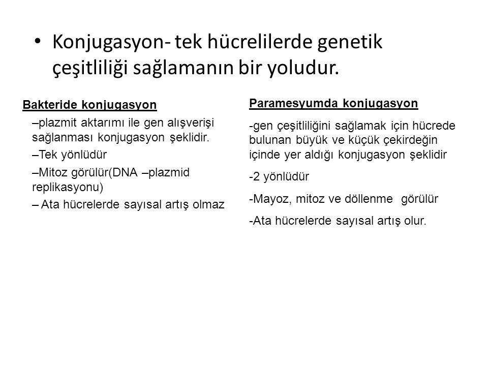 Konjugasyon- tek hücrelilerde genetik çeşitliliği sağlamanın bir yoludur.