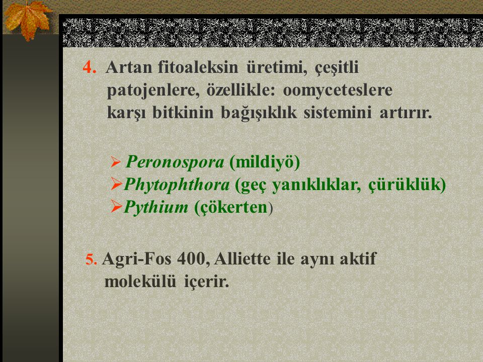Phytophthora (geç yanıklıklar, çürüklük) Pythium (çökerten)