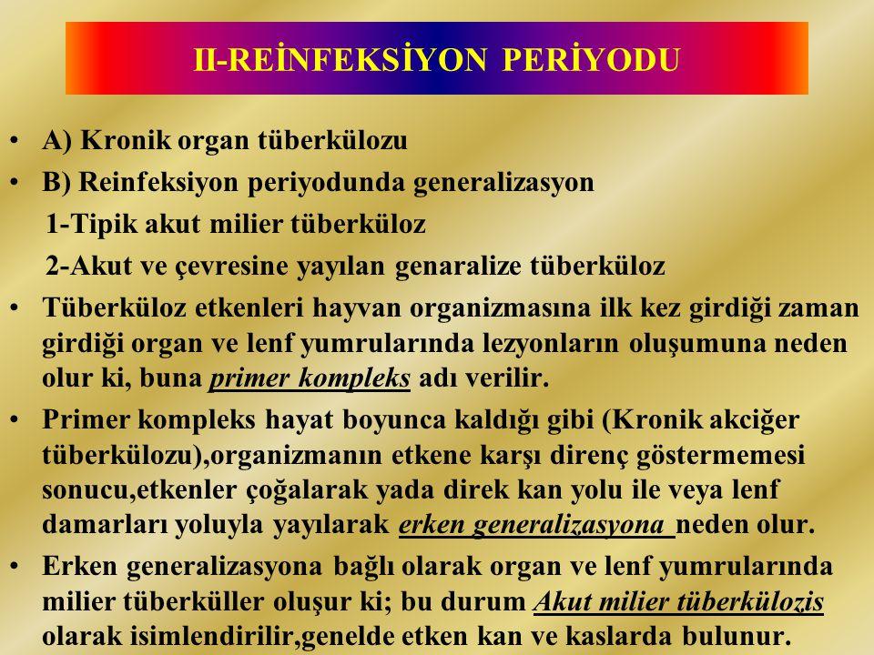 II-REİNFEKSİYON PERİYODU