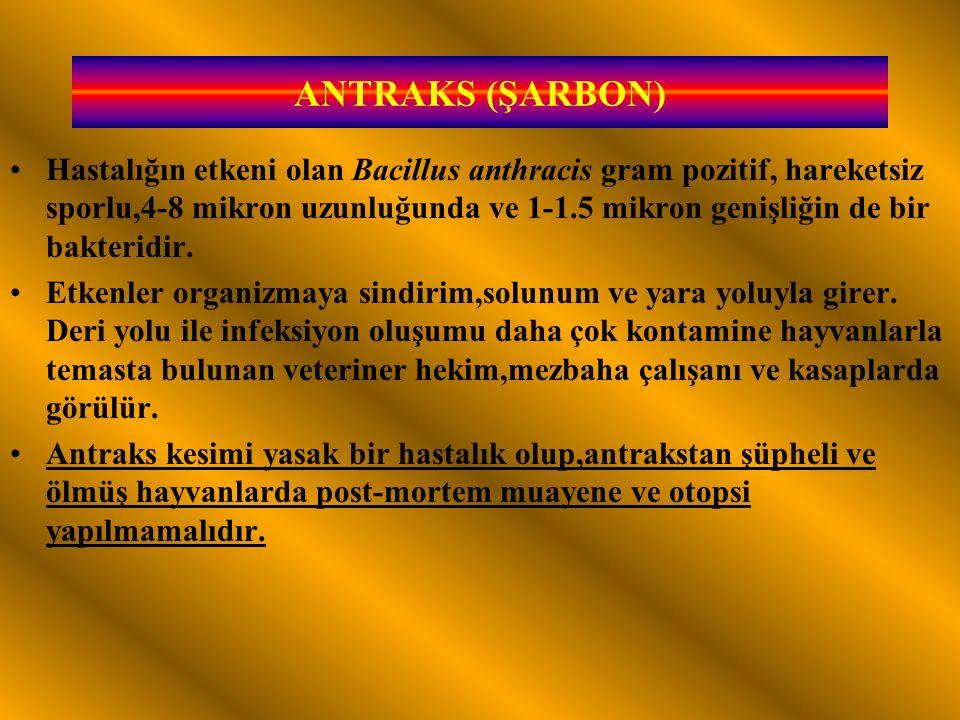 ANTRAKS (ŞARBON)