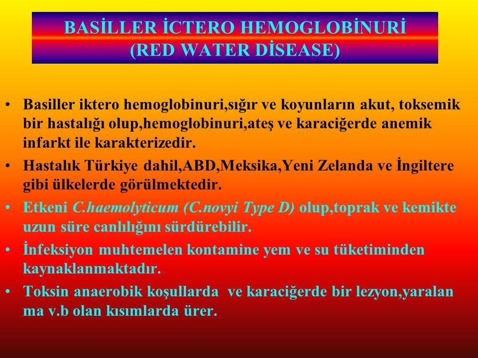 BASİLLER İCTERO HEMOGLOBİNURİ (RED WATER DİSEASE)