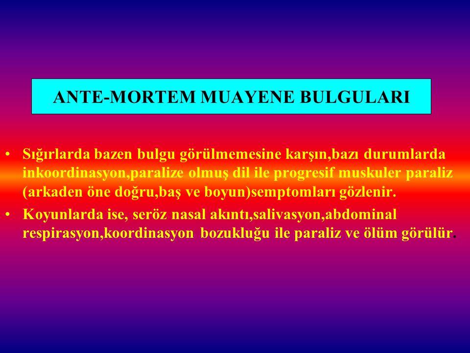 ANTE-MORTEM MUAYENE BULGULARI