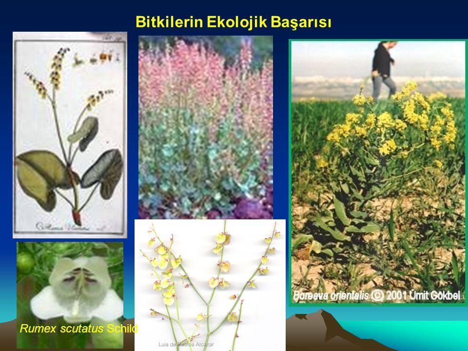 Bitkilerin Ekolojik Başarısı