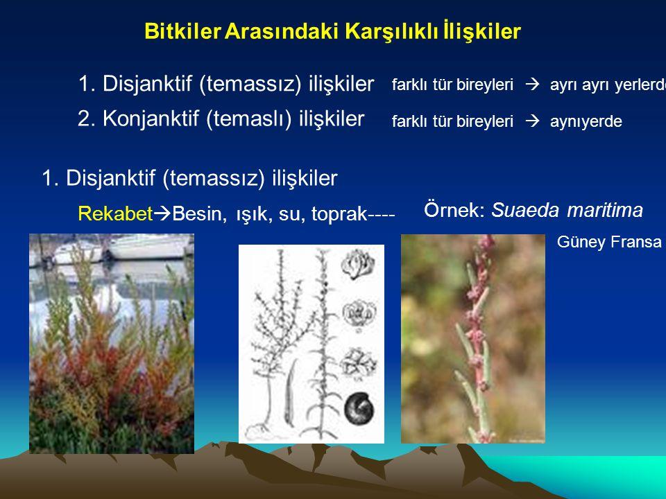 Bitkiler Arasındaki Karşılıklı İlişkiler