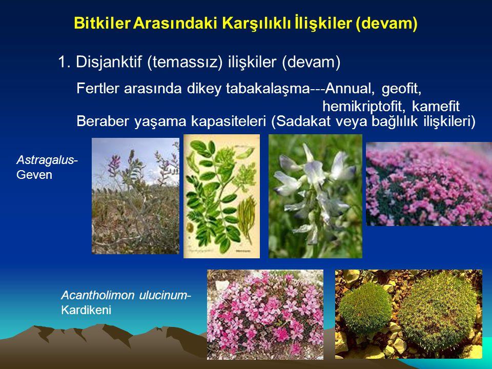 Bitkiler Arasındaki Karşılıklı İlişkiler (devam)