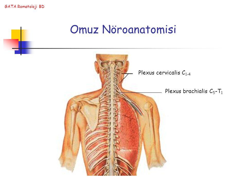 Omuz Nöroanatomisi Plexus cervicalis C1-4 Plexus brachialis C5-T1