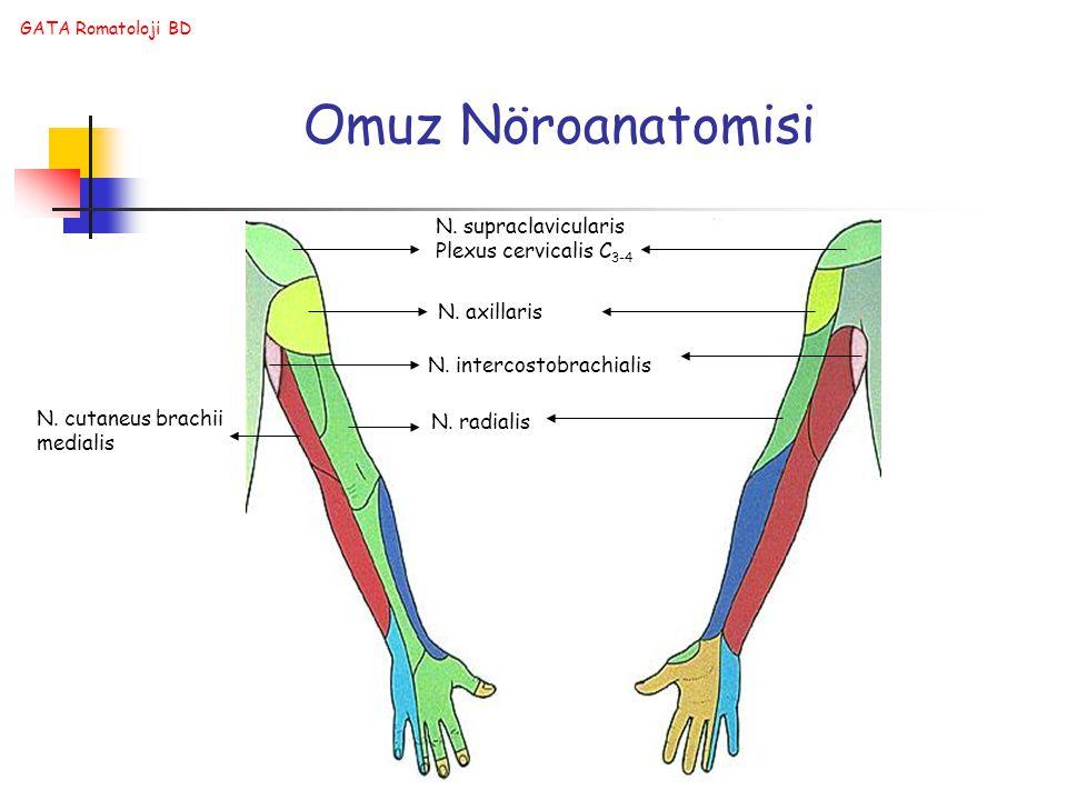 Omuz Nöroanatomisi N. supraclavicularis Plexus cervicalis C3-4