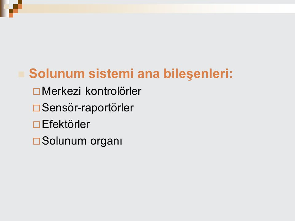 Solunum sistemi ana bileşenleri: