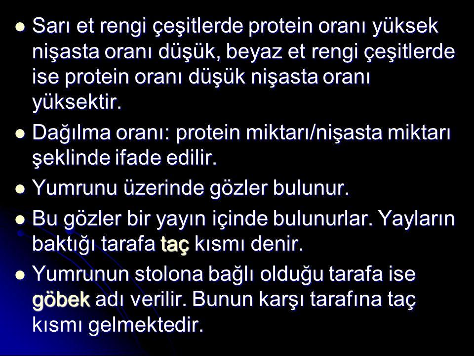 Sarı et rengi çeşitlerde protein oranı yüksek nişasta oranı düşük, beyaz et rengi çeşitlerde ise protein oranı düşük nişasta oranı yüksektir.