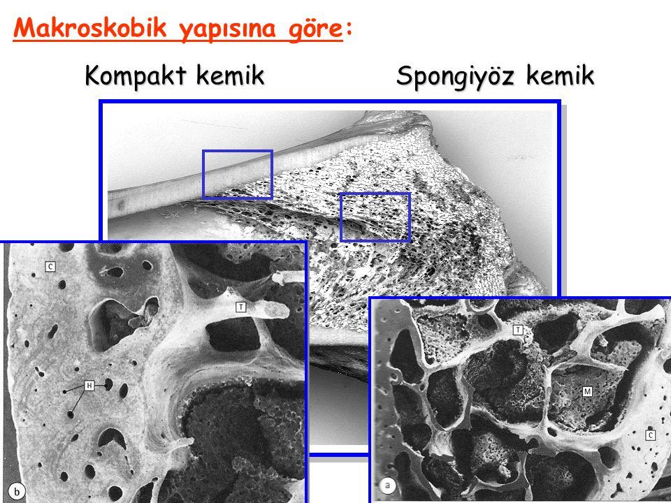Makroskobik yapısına göre: