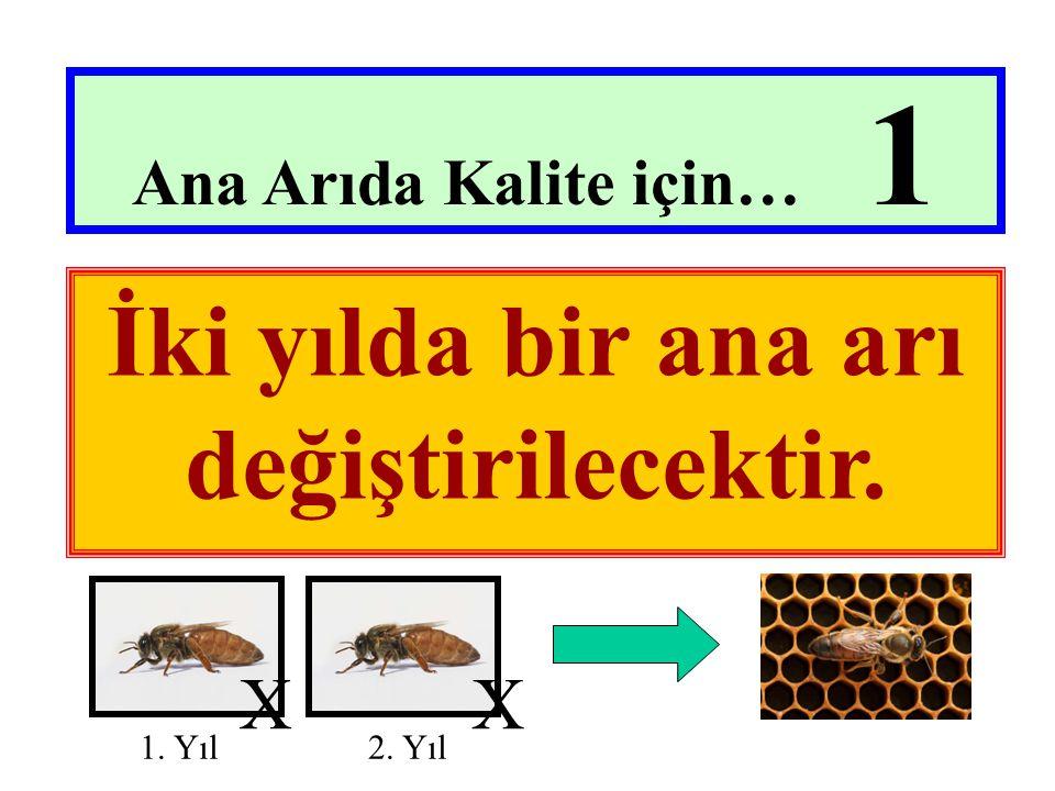 İki yılda bir ana arı değiştirilecektir.