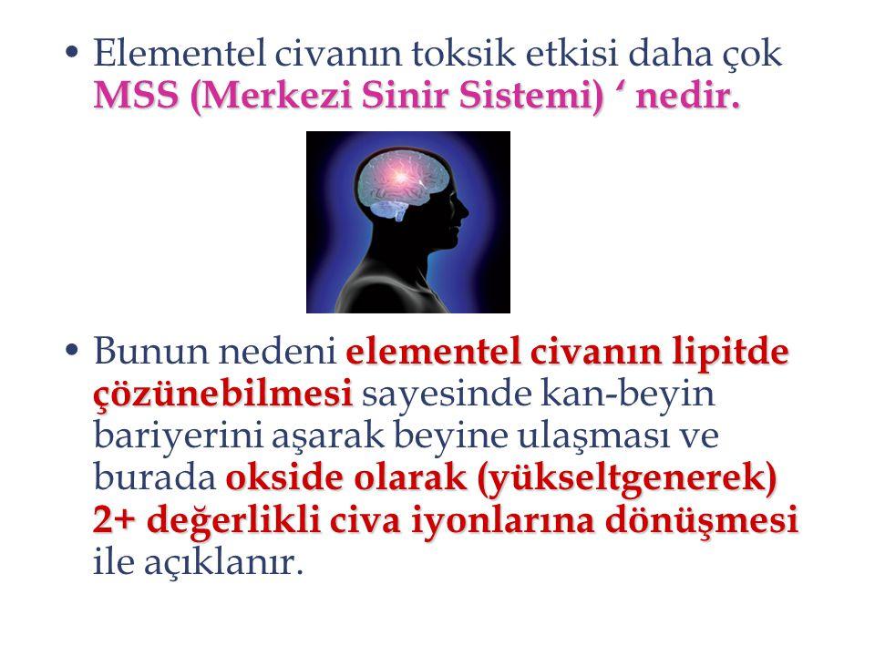 Elementel civanın toksik etkisi daha çok MSS (Merkezi Sinir Sistemi) ' nedir.