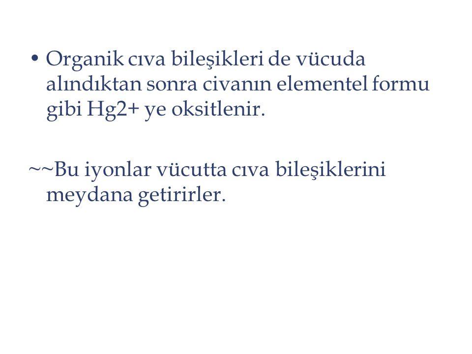 Organik cıva bileşikleri de vücuda alındıktan sonra civanın elementel formu gibi Hg2+ ye oksitlenir.