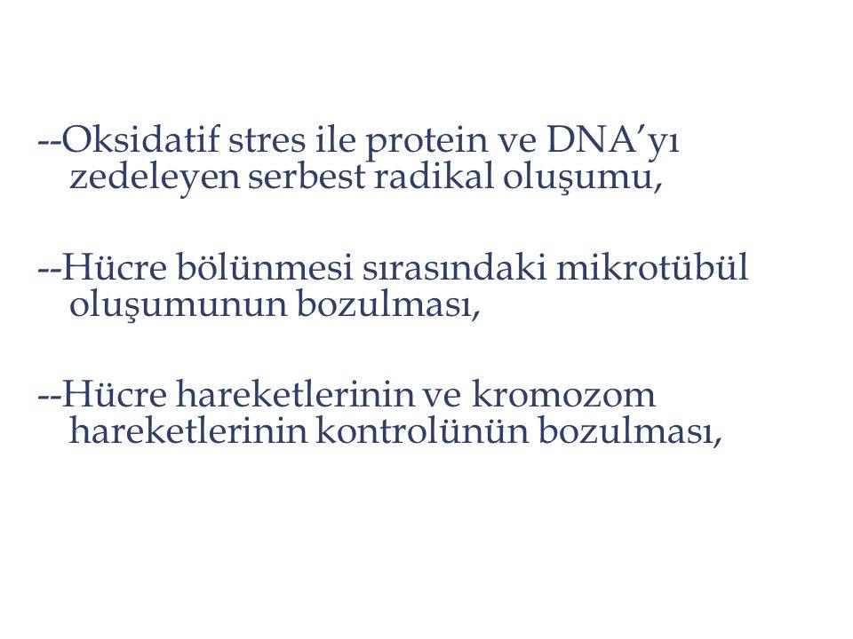 --Oksidatif stres ile protein ve DNA'yı zedeleyen serbest radikal oluşumu,