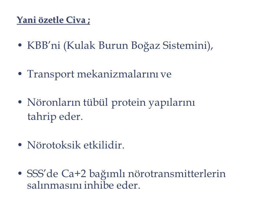 KBB'ni (Kulak Burun Boğaz Sistemini), Transport mekanizmalarını ve