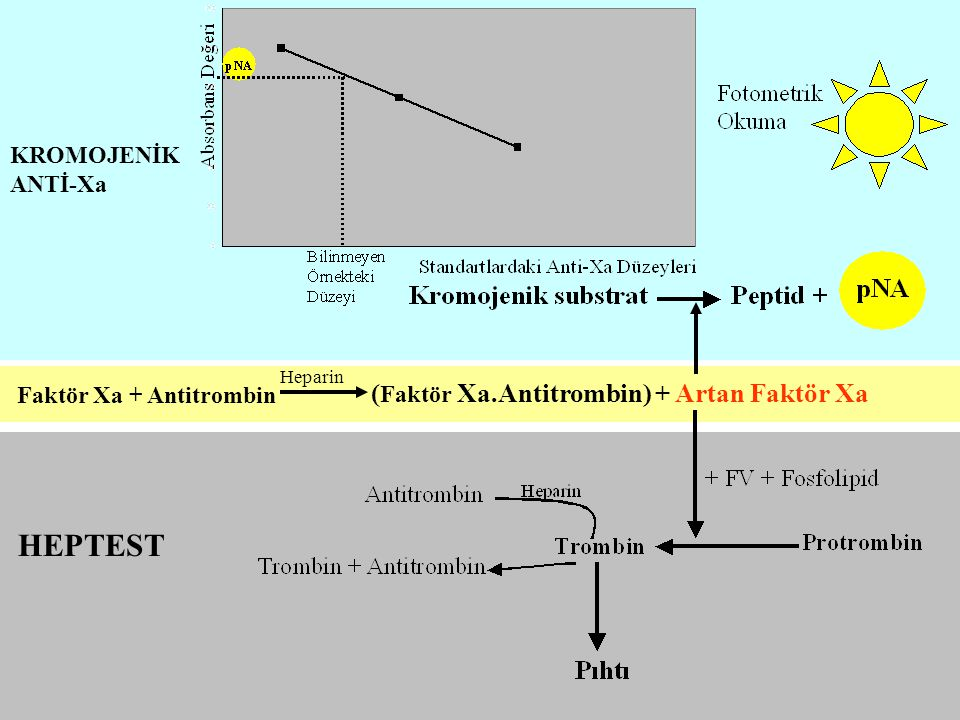 HEPTEST (Faktör Xa.Antitrombin) + Artan Faktör Xa KROMOJENİK ANTİ-Xa