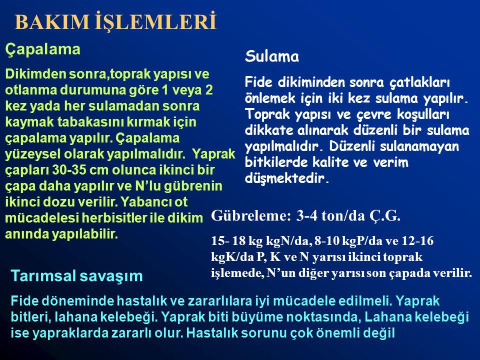 BAKIM İŞLEMLERİ Çapalama Sulama Gübreleme: 3-4 ton/da Ç.G.