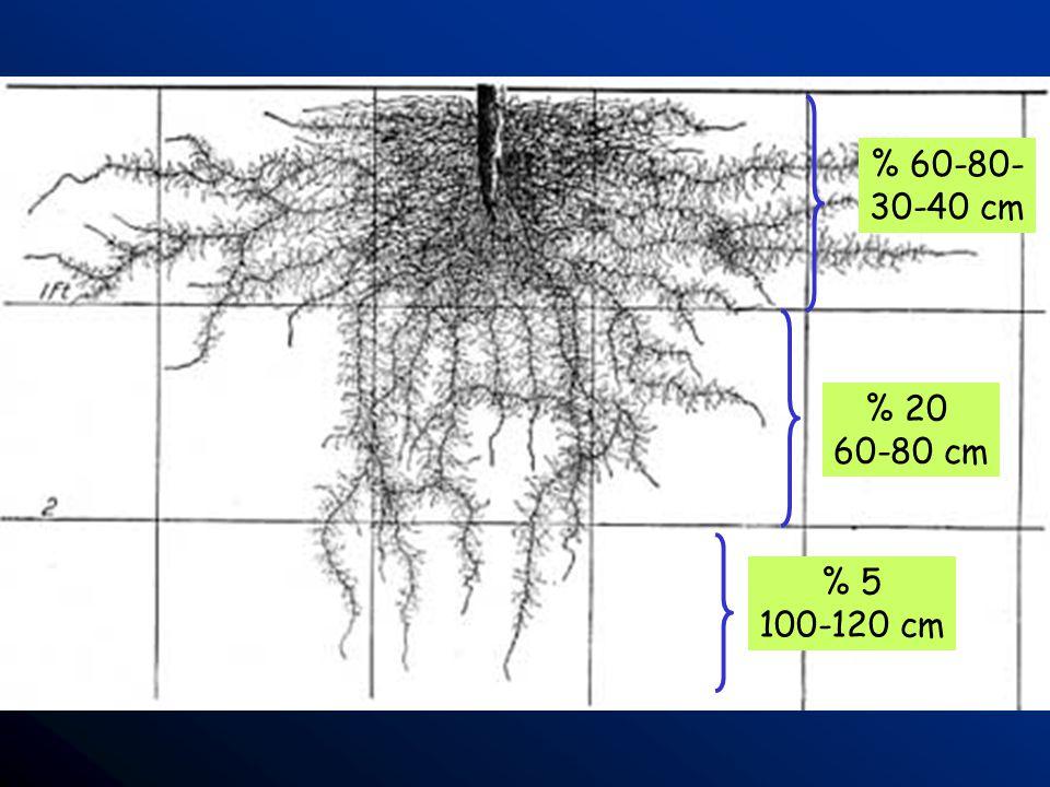 % 60-80- 30-40 cm % 20 60-80 cm % 5 100-120 cm
