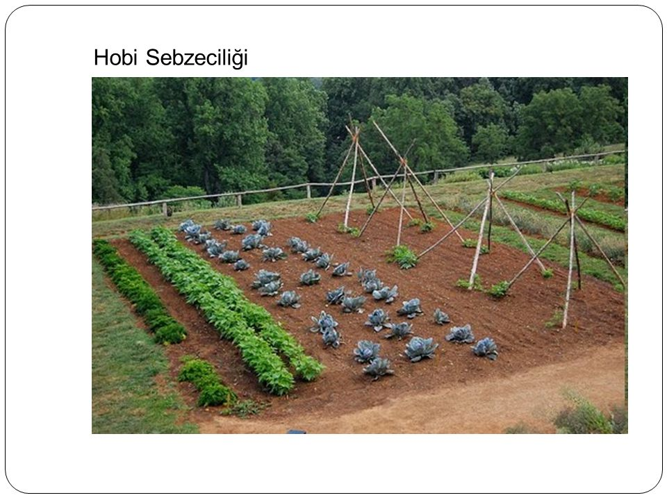 Hobi Sebzeciliği