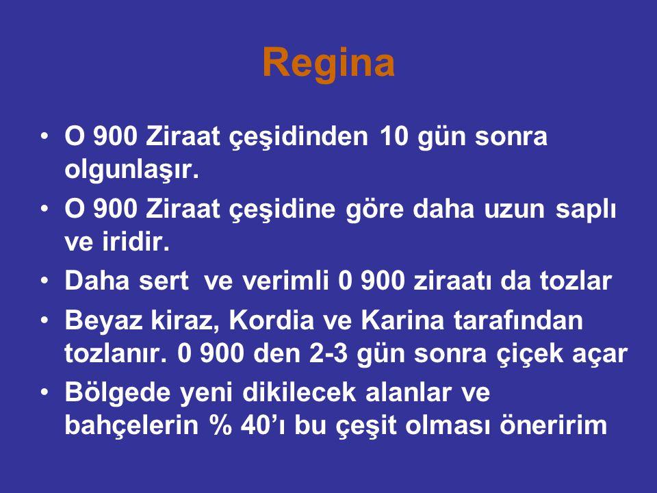 Regina O 900 Ziraat çeşidinden 10 gün sonra olgunlaşır.