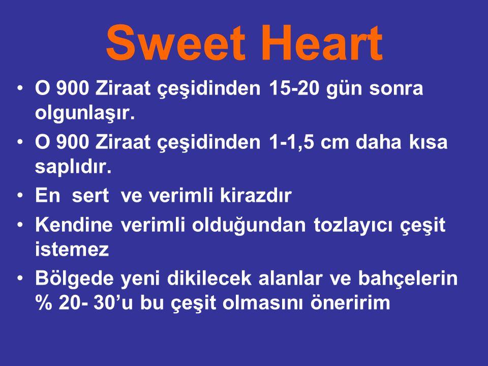 Sweet Heart O 900 Ziraat çeşidinden 15-20 gün sonra olgunlaşır.