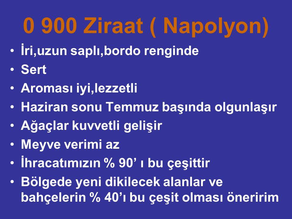 0 900 Ziraat ( Napolyon) İri,uzun saplı,bordo renginde Sert