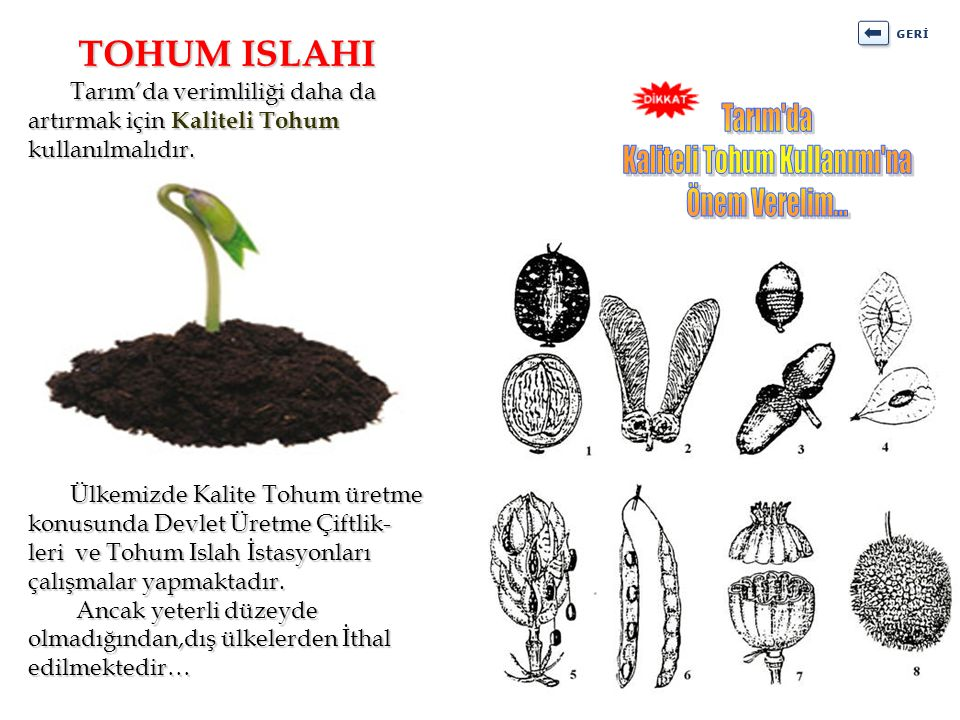 Kaliteli Tohum Kullanımı na