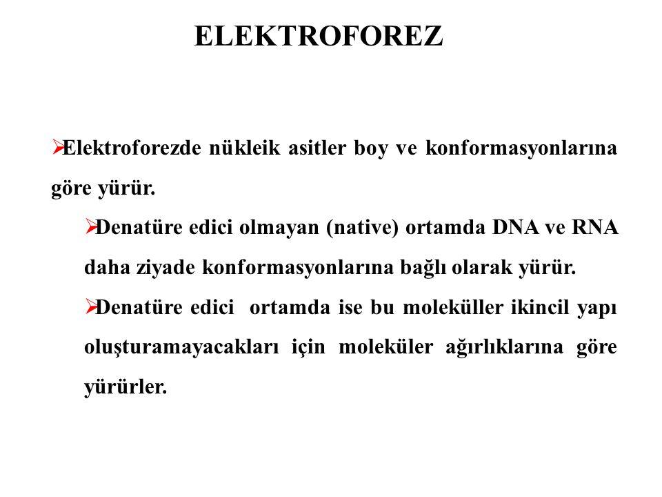ELEKTROFOREZ Elektroforezde nükleik asitler boy ve konformasyonlarına göre yürür.