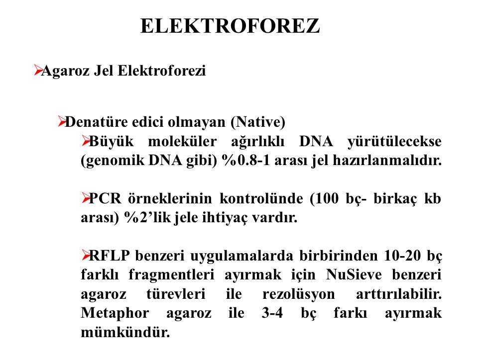 ELEKTROFOREZ Agaroz Jel Elektroforezi Denatüre edici olmayan (Native)