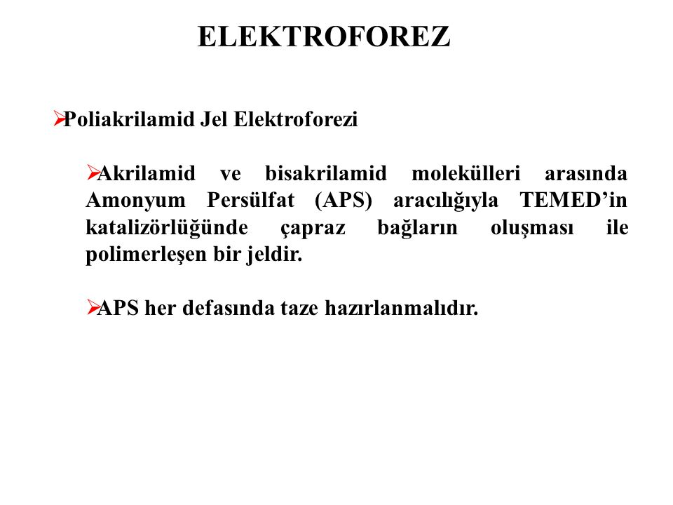 ELEKTROFOREZ Poliakrilamid Jel Elektroforezi
