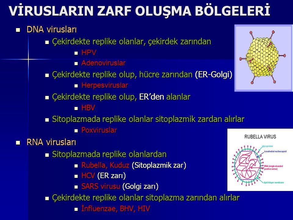 VİRUSLARIN ZARF OLUŞMA BÖLGELERİ