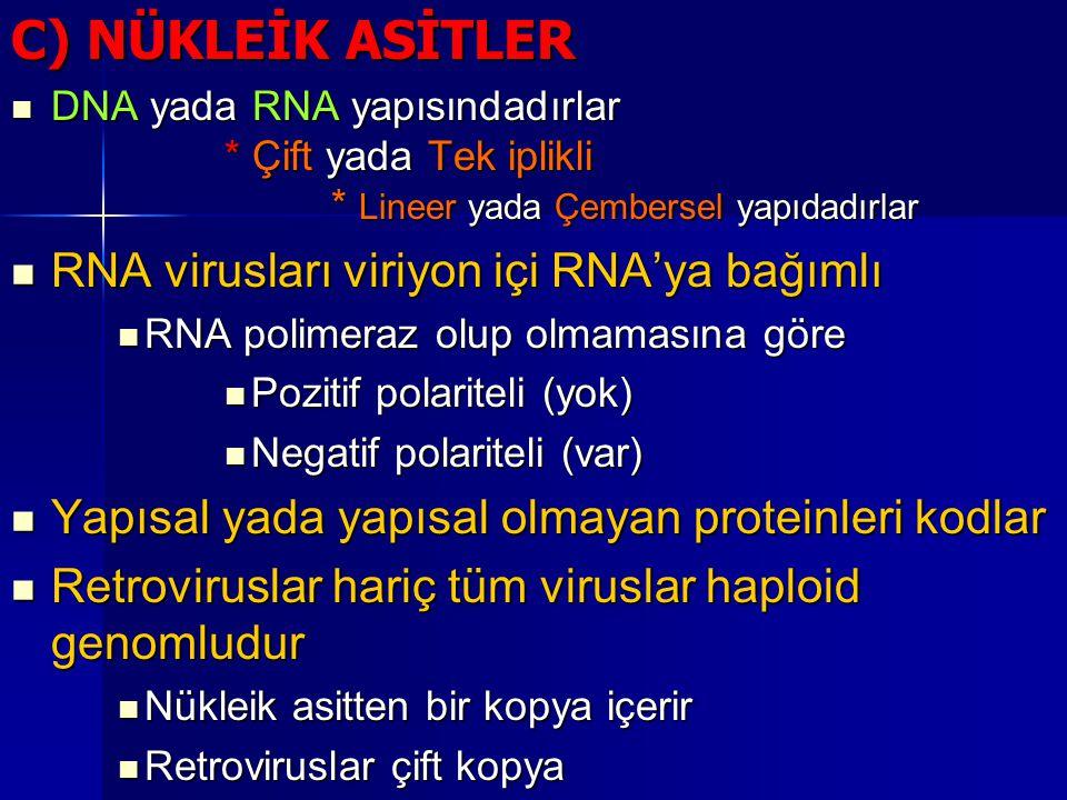 C) NÜKLEİK ASİTLER RNA virusları viriyon içi RNA'ya bağımlı