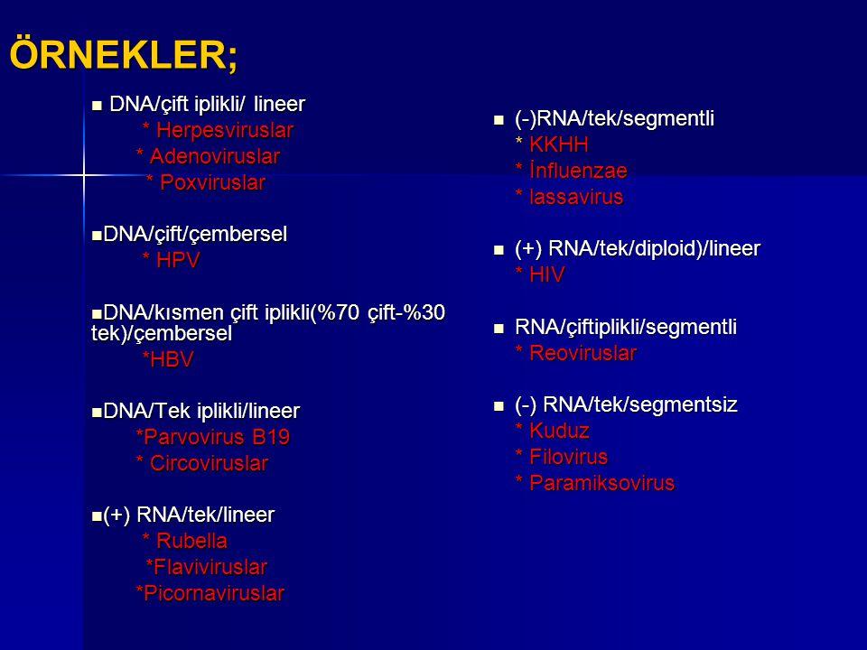 ÖRNEKLER; DNA/çift iplikli/ lineer * Herpesviruslar * Adenoviruslar