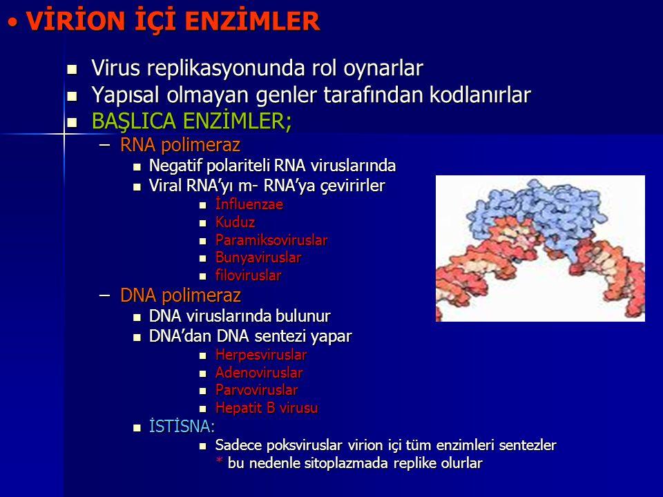 VİRİON İÇİ ENZİMLER Virus replikasyonunda rol oynarlar