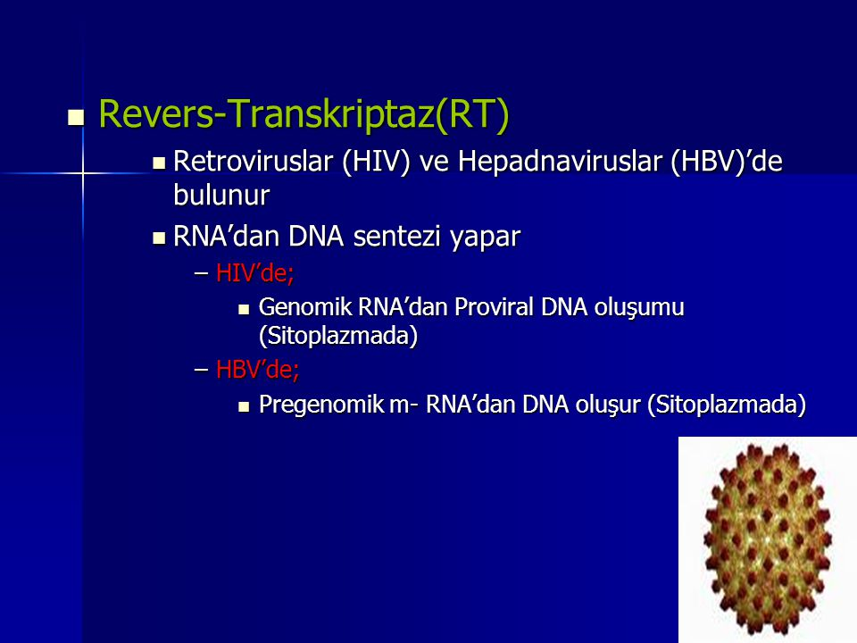 Revers-Transkriptaz(RT)