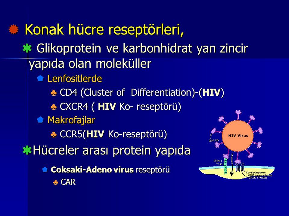  Konak hücre reseptörleri,