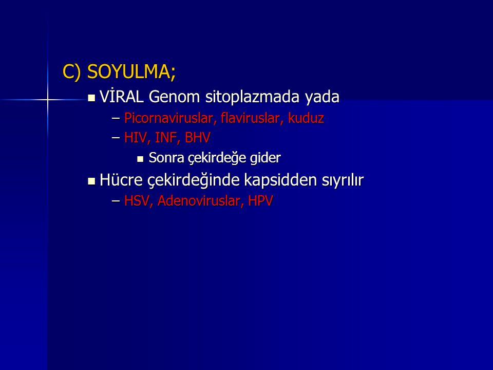 C) SOYULMA; VİRAL Genom sitoplazmada yada
