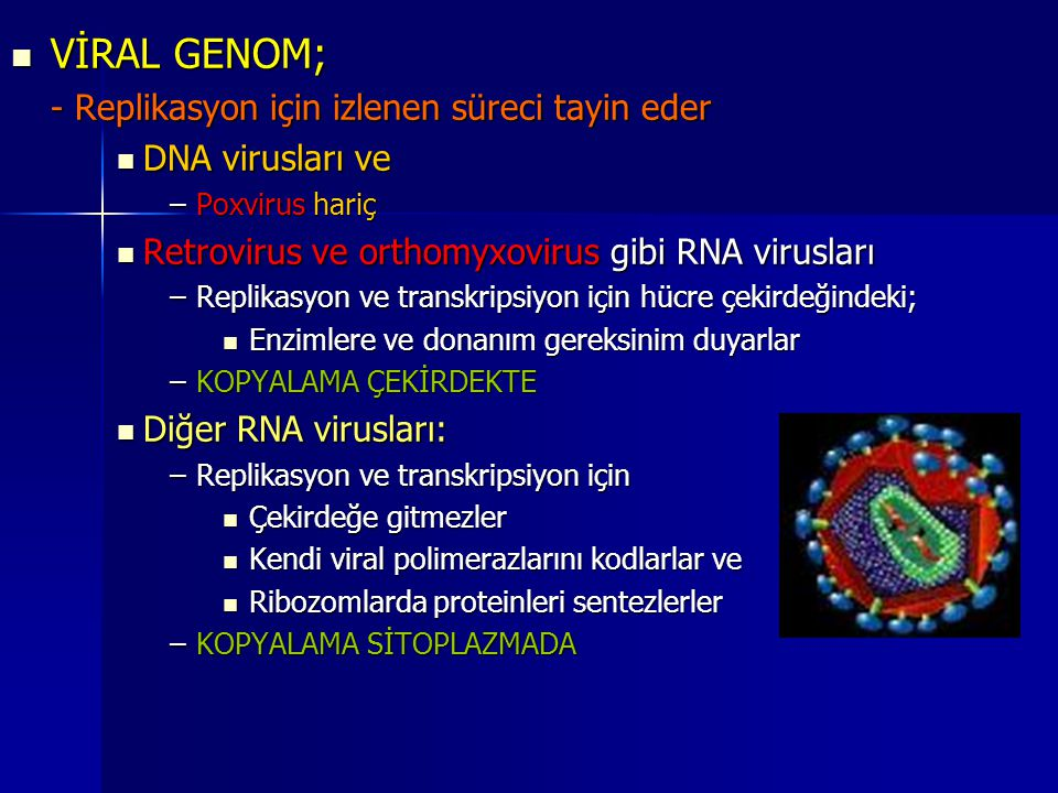 VİRAL GENOM; - Replikasyon için izlenen süreci tayin eder