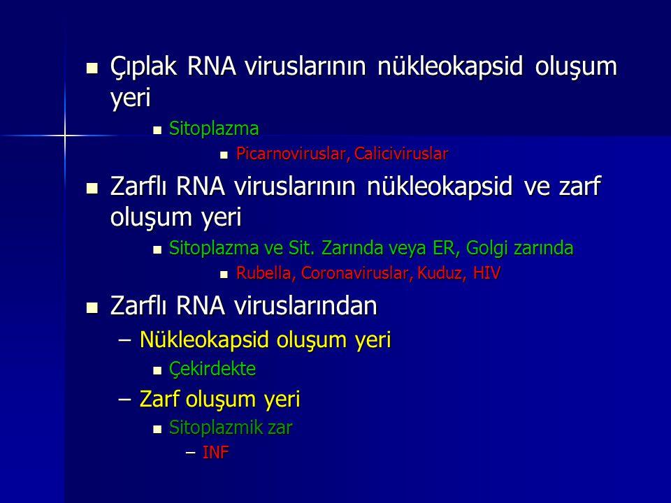 Çıplak RNA viruslarının nükleokapsid oluşum yeri