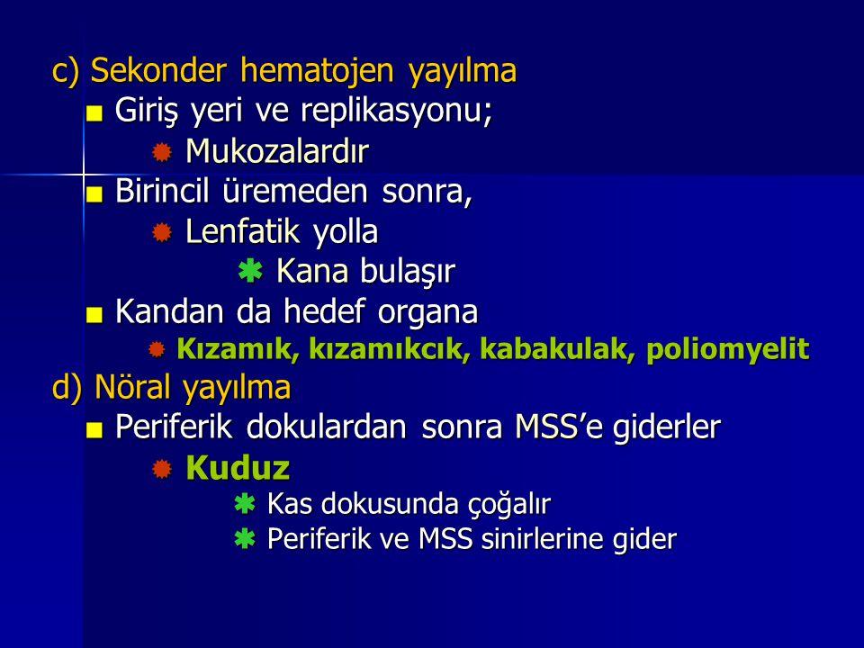 c) Sekonder hematojen yayılma ■ Giriş yeri ve replikasyonu;