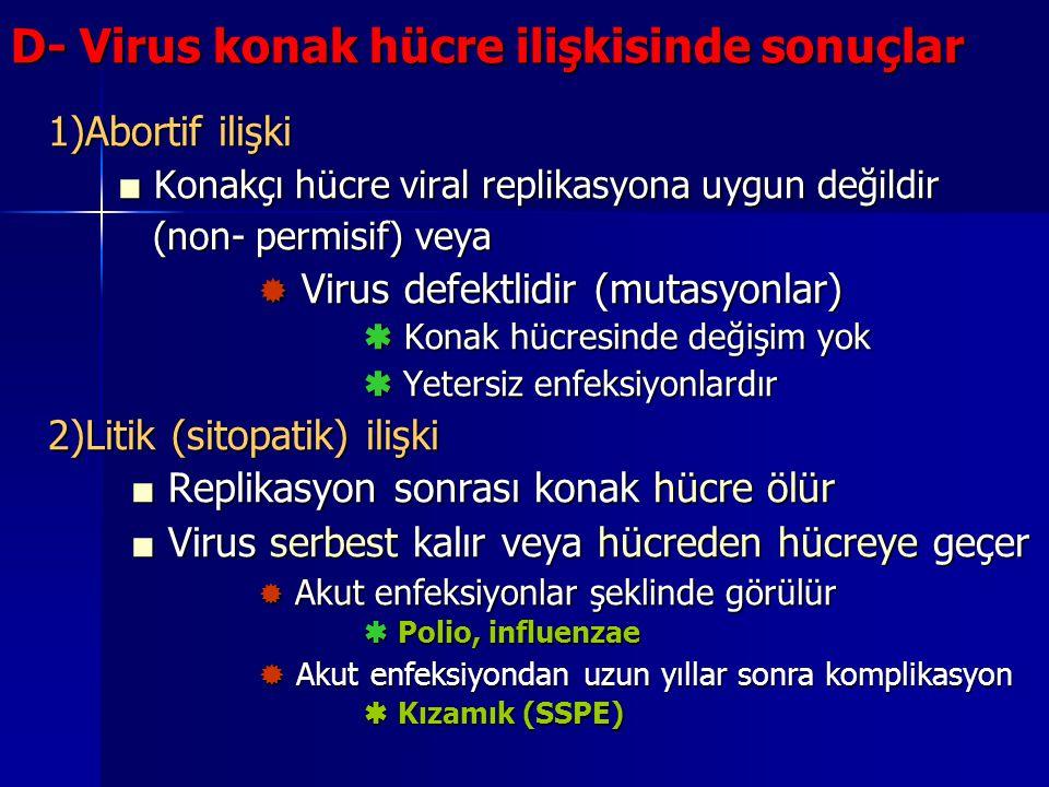 D- Virus konak hücre ilişkisinde sonuçlar