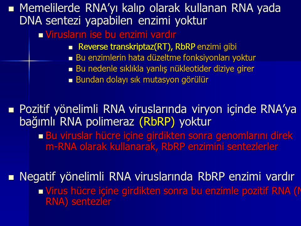 Negatif yönelimli RNA viruslarında RbRP enzimi vardır