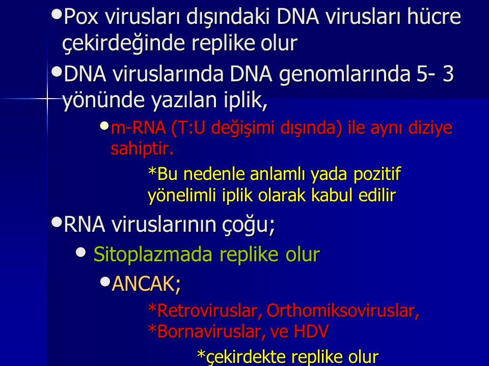 Pox virusları dışındaki DNA virusları hücre çekirdeğinde replike olur