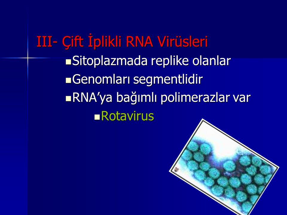 III- Çift İplikli RNA Virüsleri