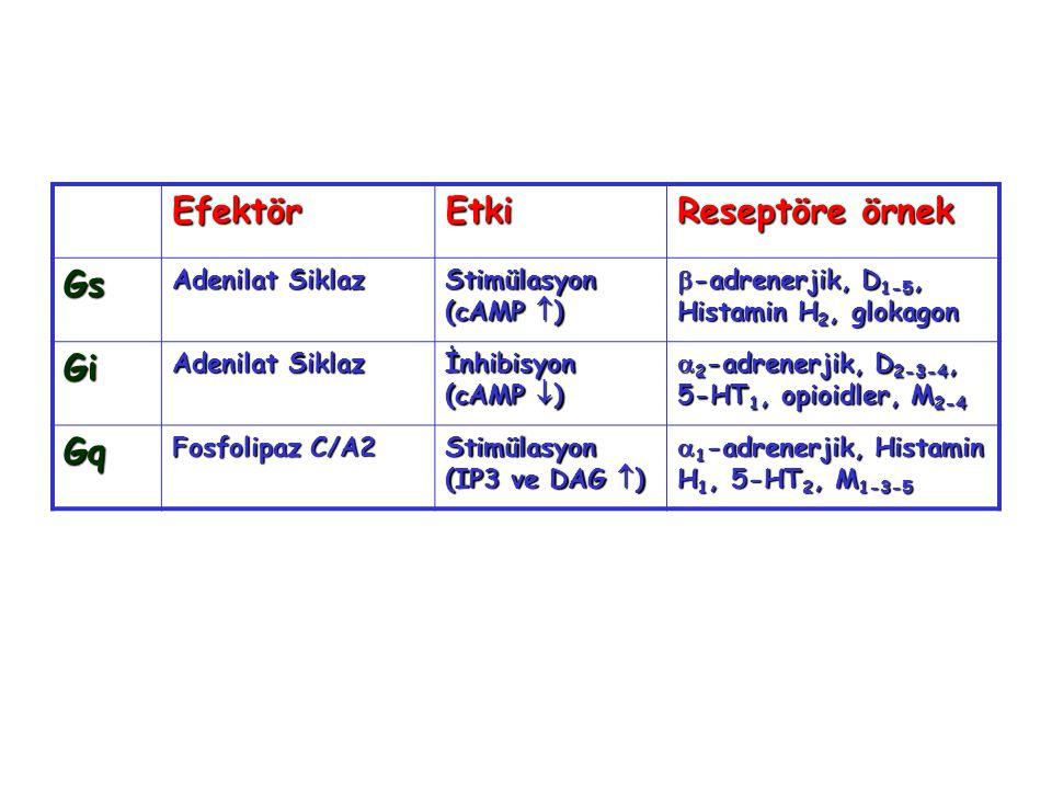Efektör Etki Reseptöre örnek Gs Gi Gq Adenilat Siklaz