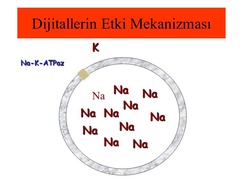 Dijitallerin Etki Mekanizması