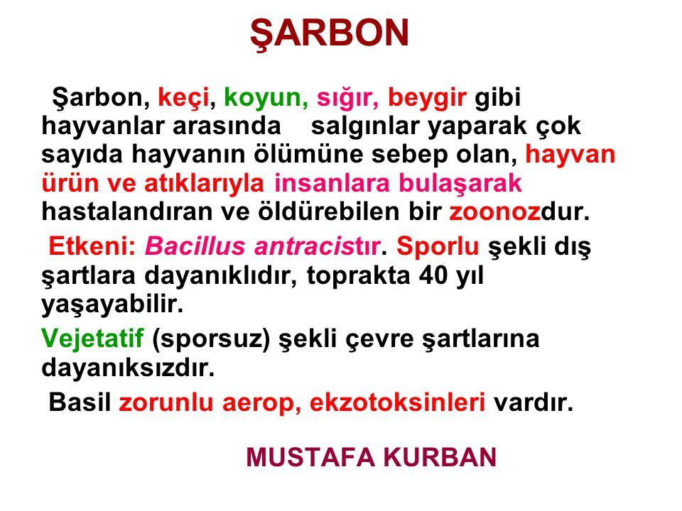 ŞARBON