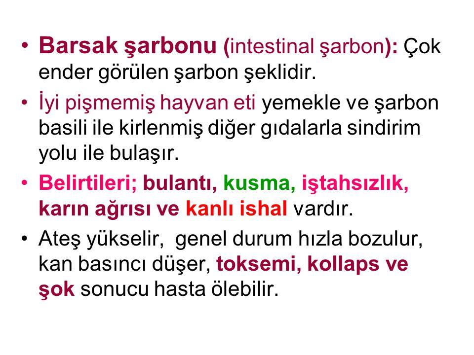 Barsak şarbonu (intestinal şarbon): Çok ender görülen şarbon şeklidir.