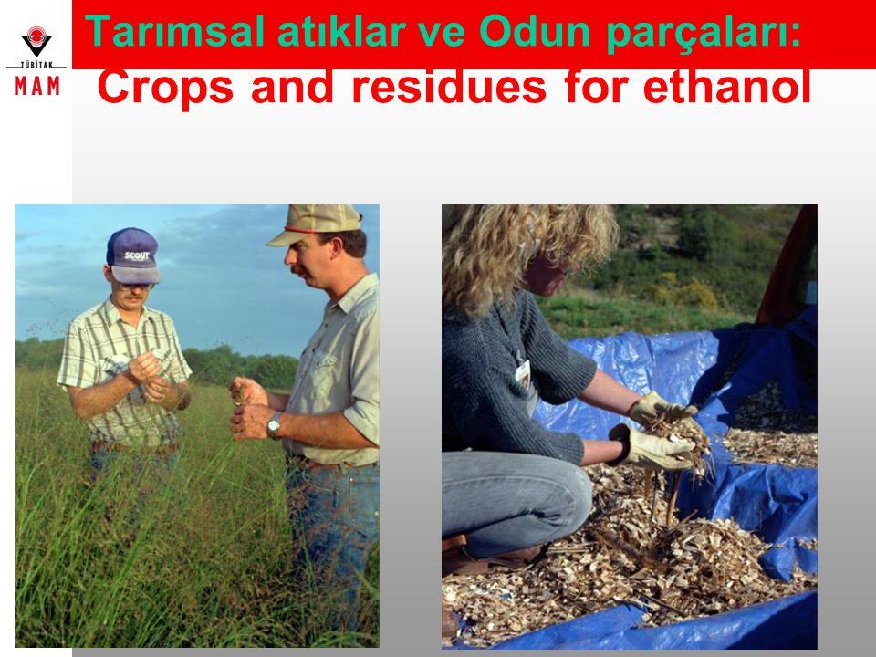 Tarımsal atıklar ve Odun parçaları: Crops and residues for ethanol
